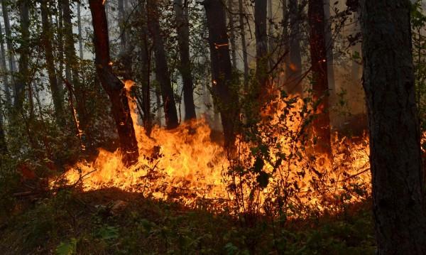 Изгоря 200 декара гора край Цар Петрово